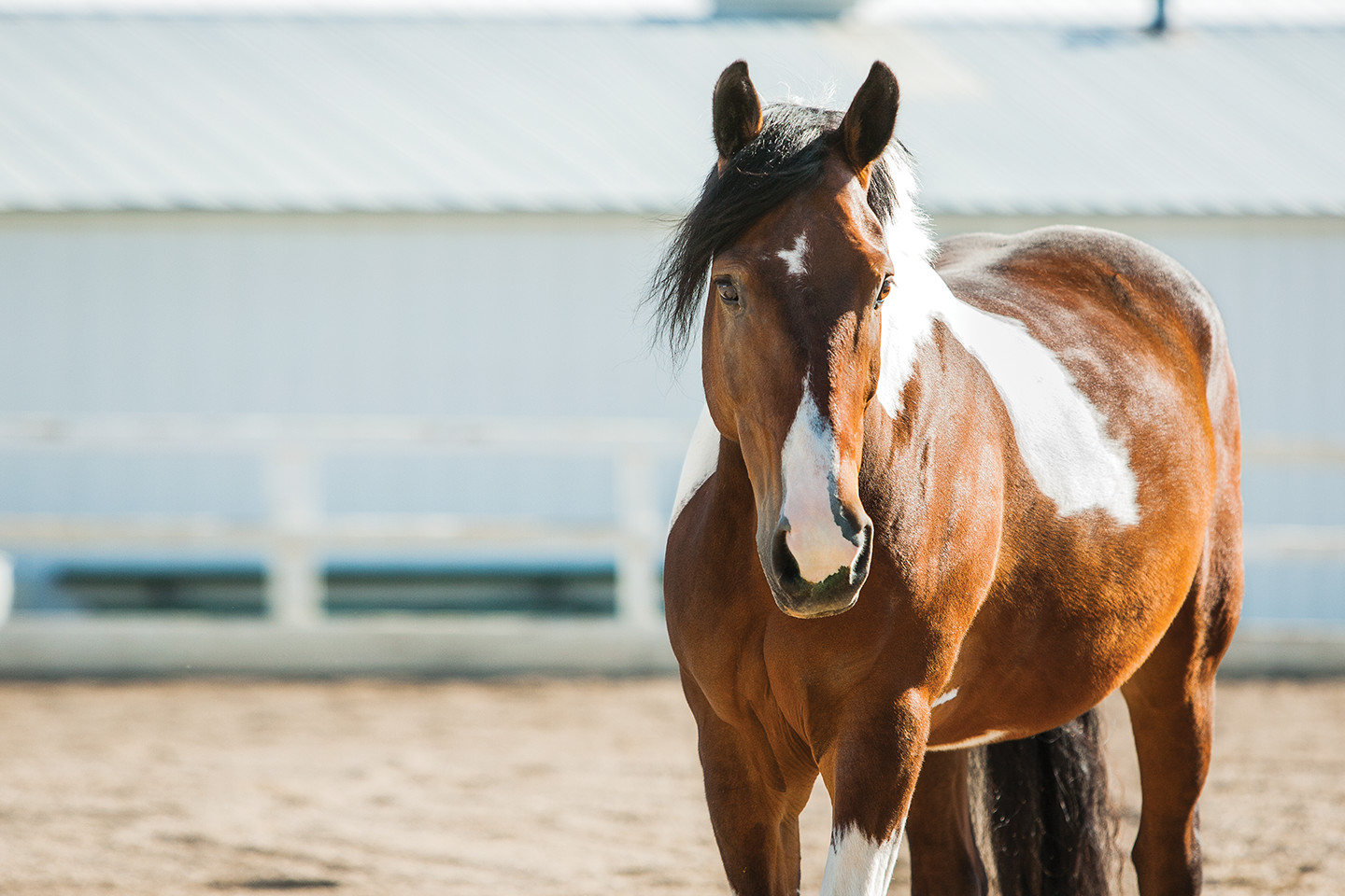 Equine Facilitated Therapy for Addiction Treatment