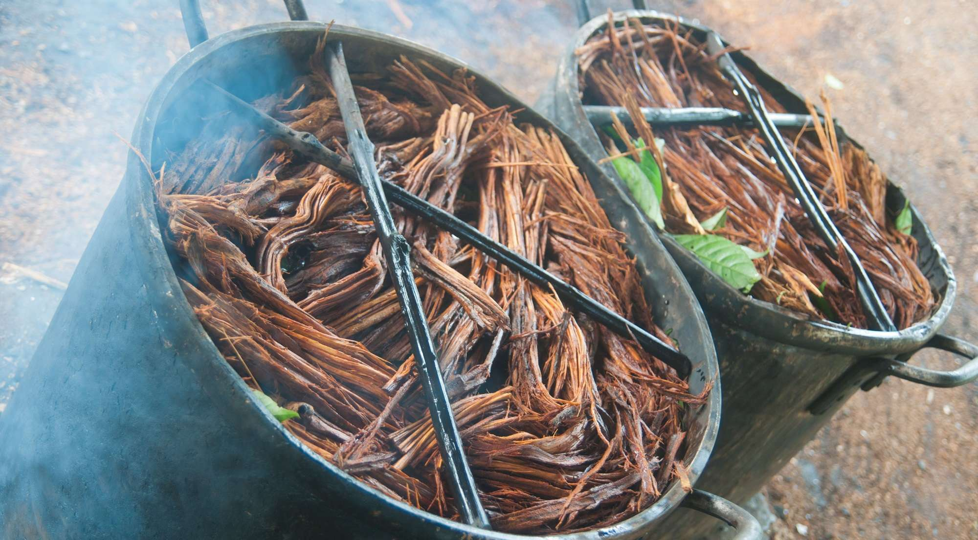 Why to Avoid Ayahuasca Addiction Treatment in South America