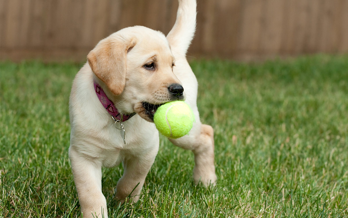 Puppy Love: Is Getting a Pet in Your First-Year Sober Smart?